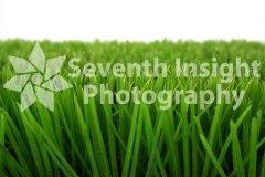 plasticgrassupclose2